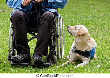 Labrador guide dog and his disabled owner on green grass.