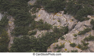 Seagull flying on the background of rocks and trees Free...