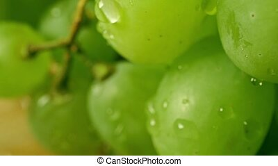 Dew on green grapes. Macro shallow focus pan shot