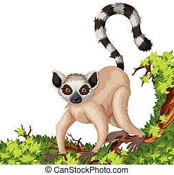 Lemur on the branch illustration