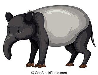 tapir, en, blanco, Plano de fondo,