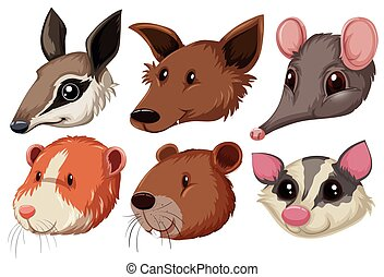 Different animal heads on white background