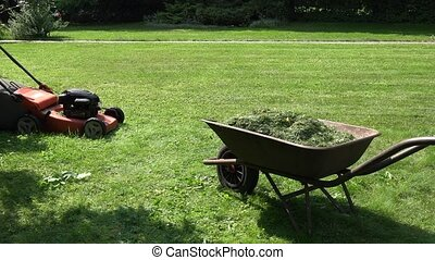 gardener girl unload grass from lawn mower bag into barrow...