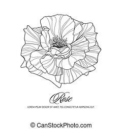 Greeting card with rose, ink sketch, can be used as...