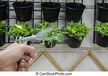 Watering to Dave plant