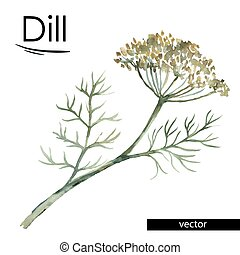 dill color illustration - dill vector color illustration...