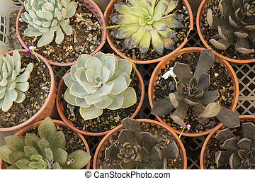 Succulent plants from top view