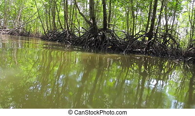 Tropical forest growing on the water