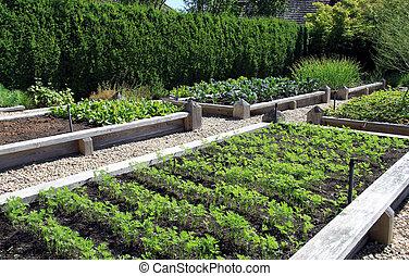 Vegetable garden - Neatly organized raised vegetable garden