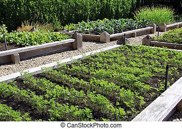 Vegetable garden - Neatly organized raised vegetable garden.
