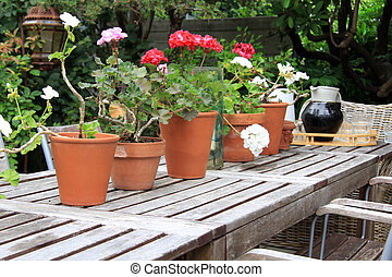 Geraniums - Picnic table outside with geraniums and a tray...