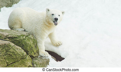teddy bear on a pile of snow - cute teddy bear on a pile of...