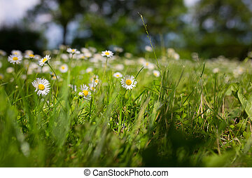 summer scene with daisy and grass - summer scene with daisy...