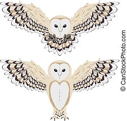 Cartoon Barn Owl - Illustration of cartoon barn owl on white...