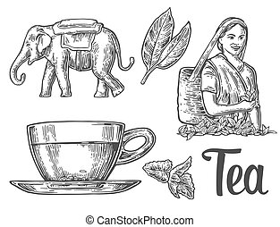 Tea picker woman, tea leaves, cup, elephant. Vector engraved vintage isolated illustration for label, poster, web. Black on white background.