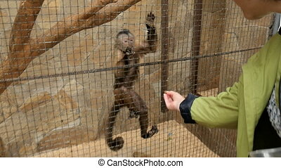 Little monkey in a zoo