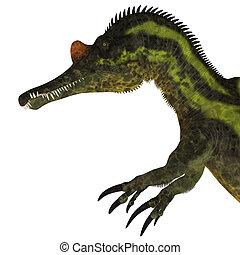 Ichthyovenator Dinosaur Head - Ichthyovenator was a theropod...