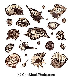 Collection of seashells - Sea shell collection isolated on...