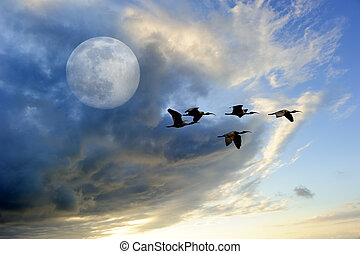 Birds Moon - Birds moon is a flock of birds flying at...