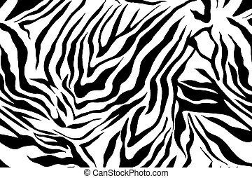 mönster, avbild,  zebra