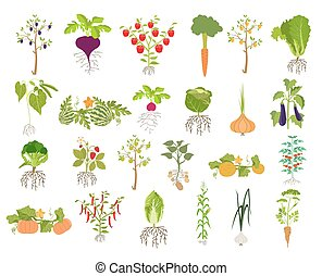 Fruits and vegetables.  Icon set