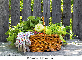 Organic vegetables basket in the garden
