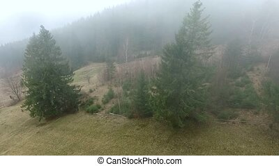 misty pine forest on hill, aerial shoot