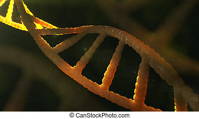3d model of DNA structure