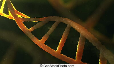 """Macro shot of 3d DNA structure"" - ""Loopable macro shot of..."