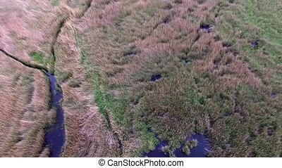 beautiful view of the lake overgrown with reeds, aerial...