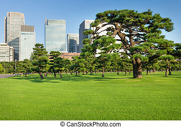 Pine trees park in front of skyscrapers of Tokio, Japan