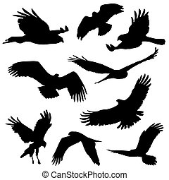 eagles and other big bird silhouettes