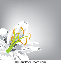 drawn by lily - illustration. White Lily in a corner of a...