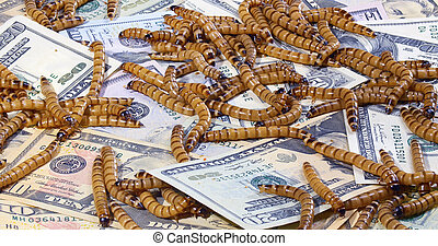 Economic crisis concept with money and worms, closeup...