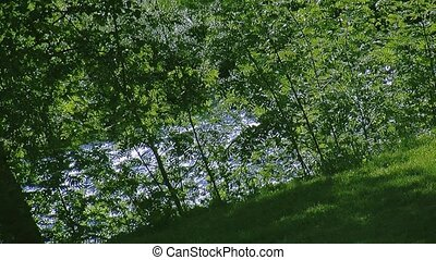 View of green leaf of many trees at fastly flowing river. Summer sunny day. Nobody. Nature