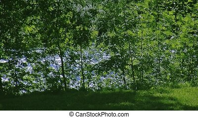 View of waving from wind leaf of green trees at fastly flowing river. Summer sunny day. Nobody.