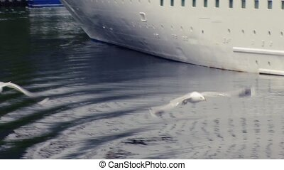 View of white seagull fly up from surface o water at port in green mountains. Cruise white ship