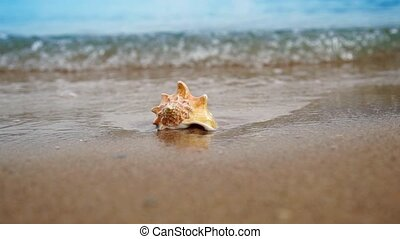 Seashell on the sand beach and waves in sunrise - Conch...