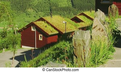 View of little wooden houses with yellow grass on roof. Summer day. Greenery. Nobody. Nature