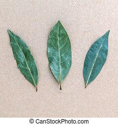 Marrom, folha, folhas, baía, fundo, 3, fundo, secado, laurel...