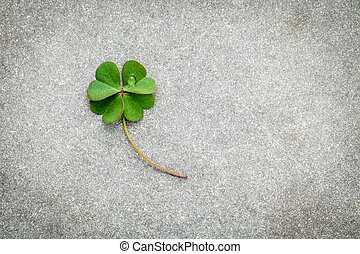 Clovers leaves on Stone Background.The symbolic of Four Leaf...
