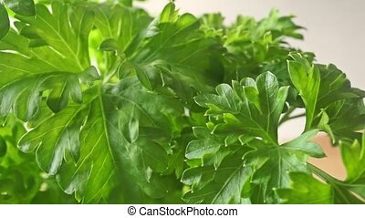Fresh parsley macro dolly video clip