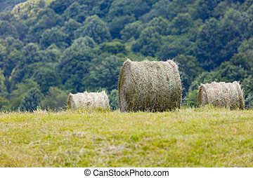 Round Bales of Hay - Freshly cut and baled round bales of...