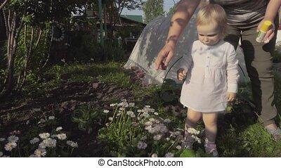 Little girl picks daises on the garden
