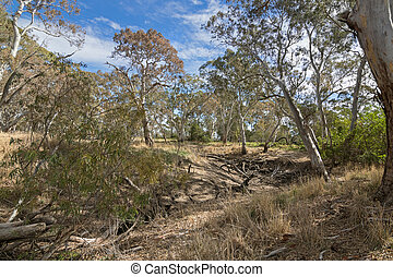 Dried Mosquito Creek line at Naracoorte forest during Autumn...