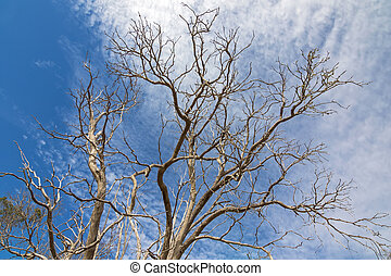 Leafless branches of tree during Autumn season in the South...
