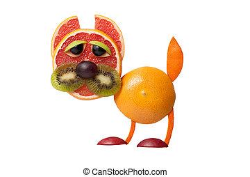 divertido, gato, hecho, de, toronja, y, naranja,