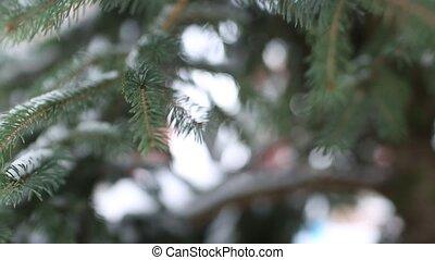 Dolly along a branch through the fir clip