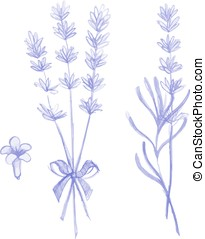 Purple lavender flowers victor hand drawn set