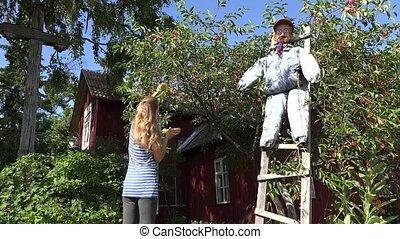 Gardener woman girl picking berries from cherry tree in garden. 4K